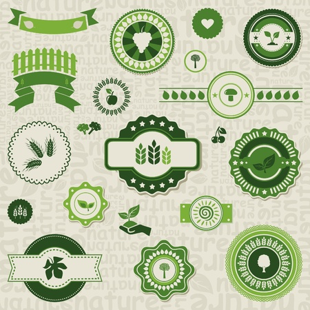 green wheat: Label of the nature for design  A vector illustration Illustration
