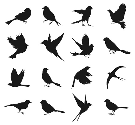 Set of silhouettes of birds   Illustration