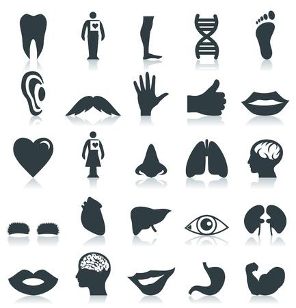 口: 人の体のセット。ベクトル イラスト