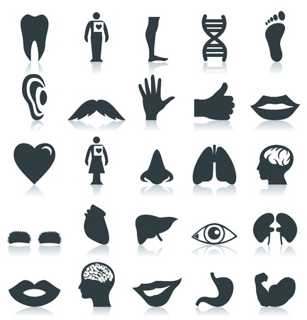 ears: Set of bodies of the person. A vector illustration