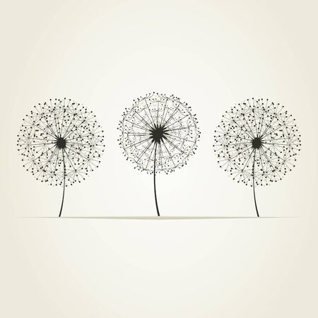 Three dandelions on a grey background  A vector illustration Vector
