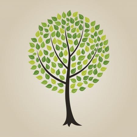 crone: Tree with a roundish crone  A illustration Illustration