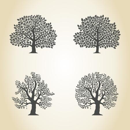 aspen: Set of trees of an oak. A vector illustration Illustration