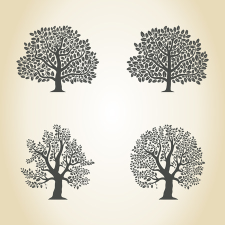 Set of trees of an oak. A vector illustration Illustration