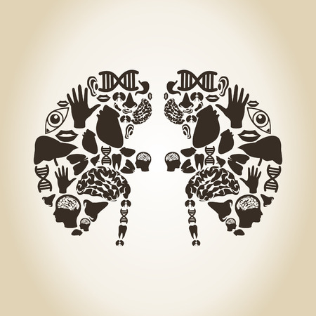 Kidneys made of body parts. A vector illustration