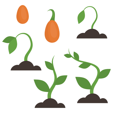 crecimiento planta: La etapa de crecimiento de las plantas. ilustración vectorial