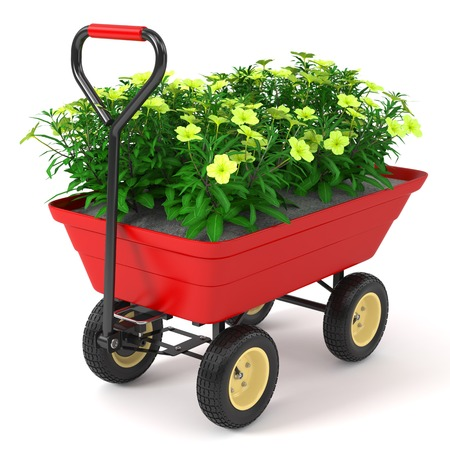 floriculture: Flowerbed in hand trolley. Isolated on white background