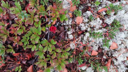 Taiga plants. Floral background. Herbs. Reklamní fotografie