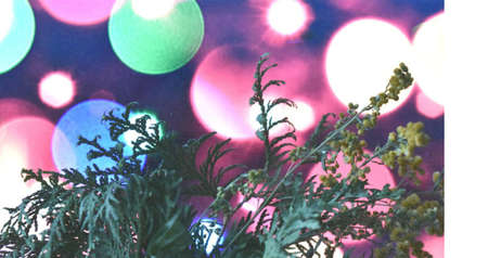 giardino di Mimosas su uno sfondo luminoso e bellissimo