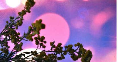 giardino di mimose su uno sfondo luminoso e bellissimo Archivio Fotografico
