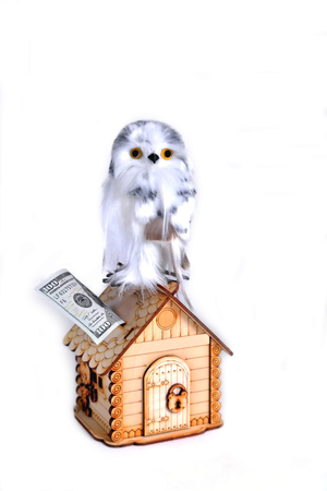 toy cute owl with yellow eyes sitting on a toy wooden house piggy bank and banknote, white background, isolate