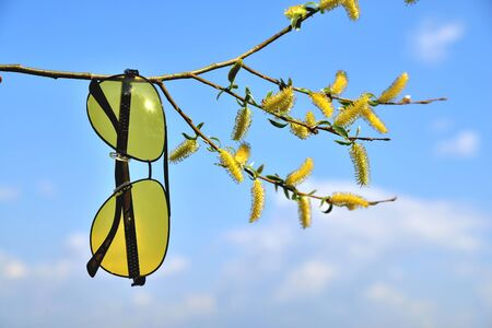 yellow glasses hang on a tree branch spring tree in yellow colors sun blue sky close-up