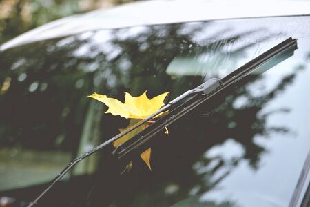 Autumn, rain yellow maple leaf on car glass, reflection in the glass, autumn trees beautiful glare tinted, after rain close-up