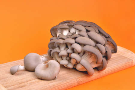 Edible natural oyster mushrooms, bamboo cutting board, on orange background, mushrooms for cooking and pickles, close-up and copy space
