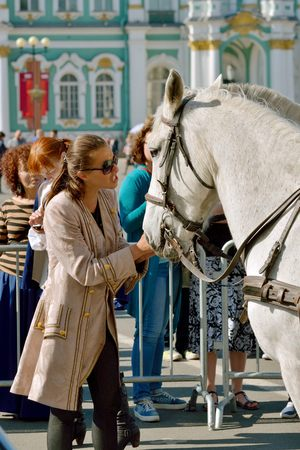 disobedience: 15-05-2016.Russia.Saint-Petersburg.Palace square.The coach scolds the horse for disobedience.