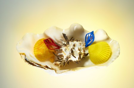 conch shell: Small sea shells lying inside a large conch shell.