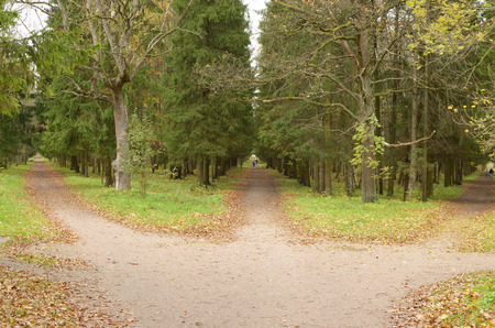 Three paths in the woods lead in different directions. Foto de archivo