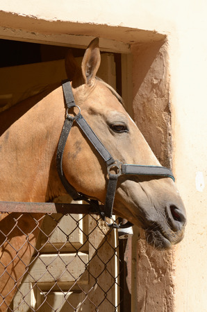 brute: Young horse standing in the stables and basks in the sun.