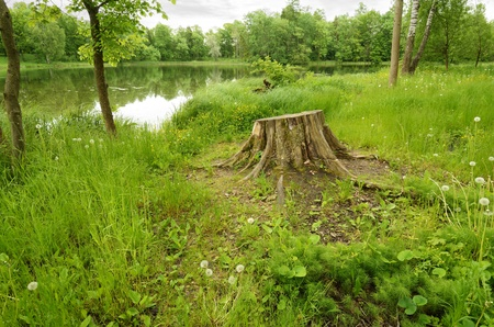 The nThe natural landscape in forest with green vegetation on the shore .atural landscape in the woods.