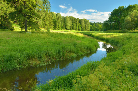 Young leaves on trees and green grass by the river, beautify the natural landscape.