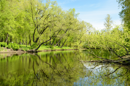 Came the warm spring.The leaves blossomed and turned green in the trees. Imagens