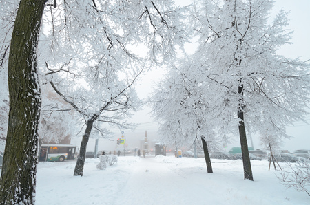 Snow-white winter in the city.The trees are covered with bright snow .Beautiful winter landscapes. 版權商用圖片