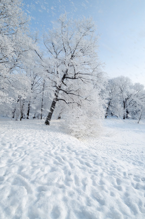 On the ground and in the trees is a lot of snow.Beautiful and cold winter. Stock Photo