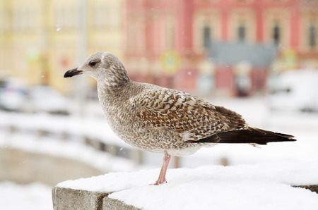 A large Seagull sits on the railing of the bridge.Shes getting ready to fly.