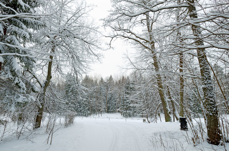 Cold winter in the woods.On the ground and in the trees is a lot of snow. Stock Photo