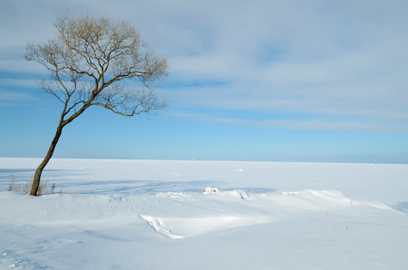 The natural landscape in the winter season.Beautiful nature.Everywhere is white snow.