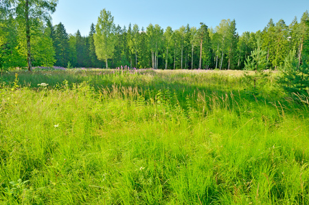 Is worth solar summer.In a clearing in the woods growing green grass.