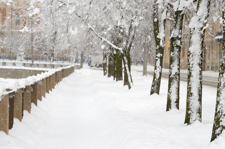 Snow-white winter in the city.The trees are covered with bright snow .Beautiful winter landscapes. Stock Photo