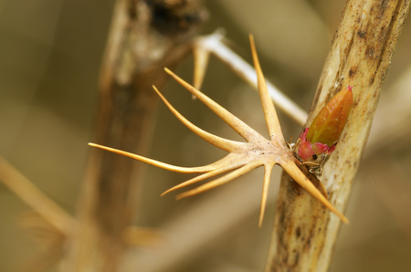 The thorns on the stems of plants.Thorns serve as protection for plants.