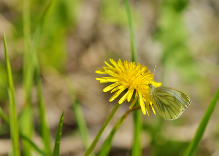 In the meadow grow various wild flowers. Butterfly drinks nectar from a flower. Stock Photo