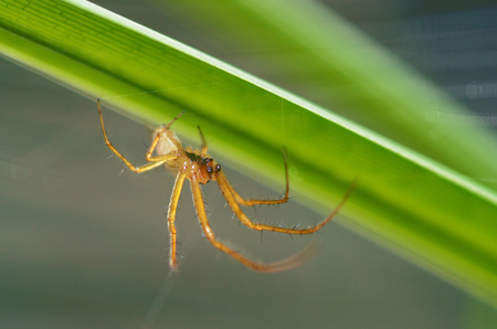 Summer activity of insects.A spider knits a web. Stock Photo