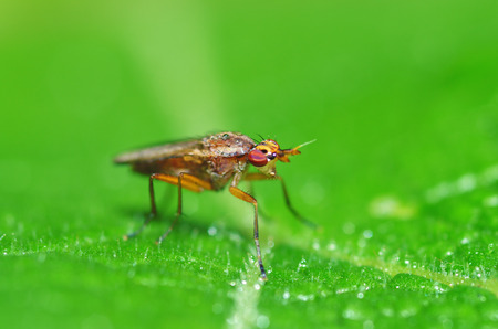 the bedbug sits on a leaf.In the morning the grass is covered with dew.