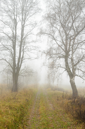 Foggy morning in autumn .Its cold outside.Plants are covered with frost.
