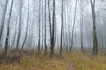 Foggy morning in autumn .It's cold outside.Plants are covered with frost.