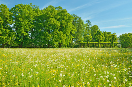 Summer is Sunny, warm weather.On the field there are various herbs and flowers. Stock Photo