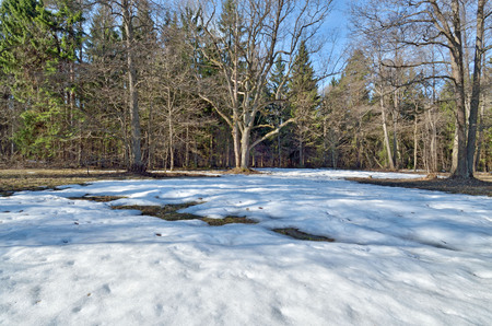 Springtime in the woods.Shines warm the sun.The remnants of snow melt from solar rays.