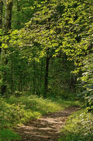 The trail in the forest doubles in different directions.Colorful views of nature with green vegetation.