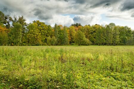 Beautiful forest landscape.Around the green meadows bloom, trees grow.