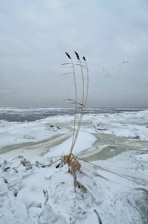 It's a cold and frosty winter.The Bay is covered with ice. Reklamní fotografie - 135050746