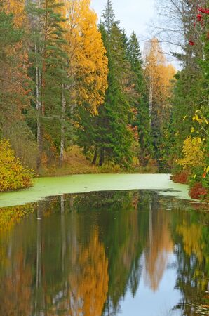 Autumn landscape in the Park.The leaves on the trees have a multicolored color. Reklamní fotografie - 135329611
