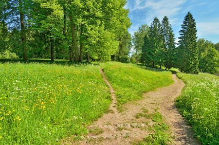 Sunny landscape in the forest.Colorful views of nature with green vegetation. Reklamní fotografie - 135330356
