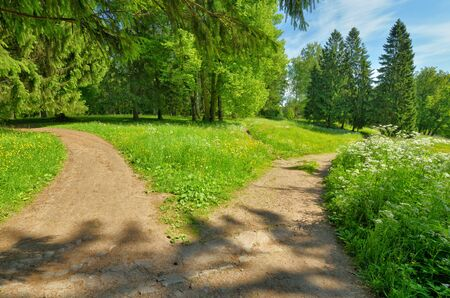 Sunny landscape in the forest.Colorful views of nature with green vegetation. Reklamní fotografie - 135333565