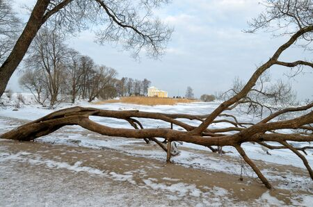 Natural landscape in the Park.On the ground and in the trees is a lot of snow.Beautiful and cold winter. Reklamní fotografie