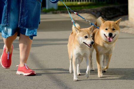 The dog walks on a leash.So that the animal does not run away from the owner.