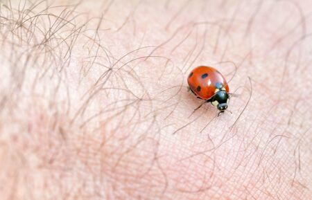 Ladybug crawls on a hand.This is a beetle with red wings. Reklamní fotografie