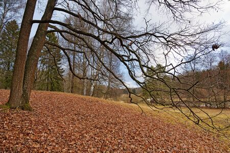 Beautiful landscape in the forest in late autumn.Brown leaves lie on the ground.